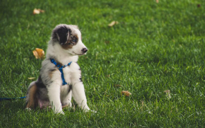 Dear EarthTalk: Is it true that lawn chemicals can cause canine cancer, and if so, how can I protect my dog?