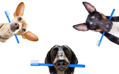 Have you brushed your pet's teeth today?