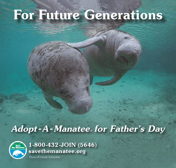 ad-manatee-fathers-day